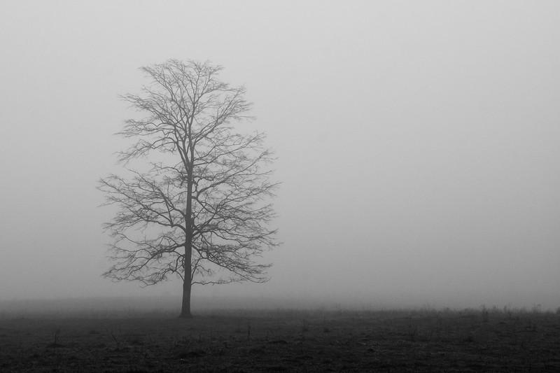 """""""Solitude"""""""