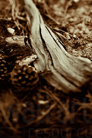 Forest Floor Nature Study