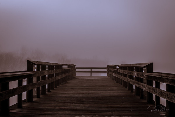 Dock Into the Fog