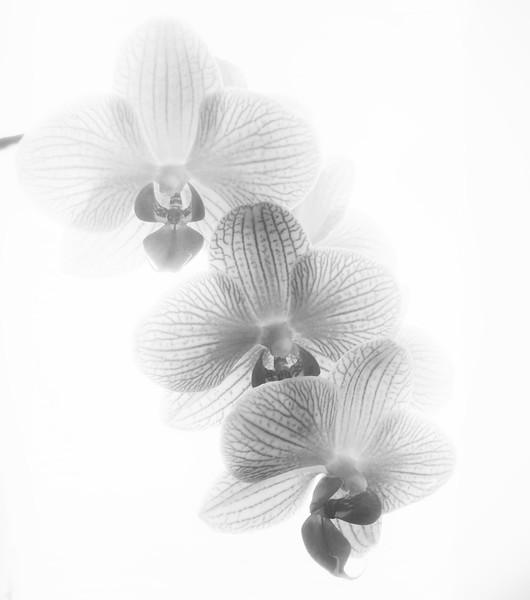 Orchids~