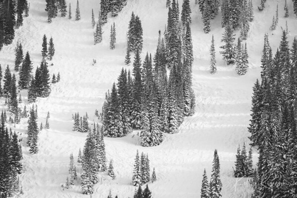 An afternoon view of a popular skiing location. You can just imagine the many skiiers that explored this mountainside, roaming around the trees, making their way downhill.