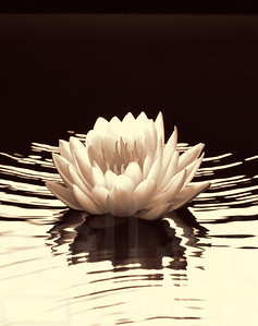 Floating Flower | Wall Art Resource