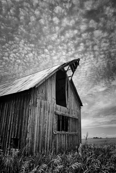 Conant Creek Barn B&W