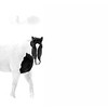 Horse in a Snow Storm
