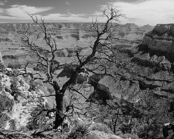 Black and White: Arizona