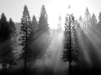 """Ko`ele Morning Mist"""