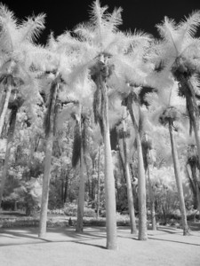 """Royal Palms of Ko`ele"""