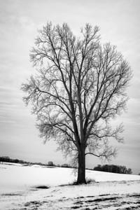 Winter Bartholomew County, Indiana
