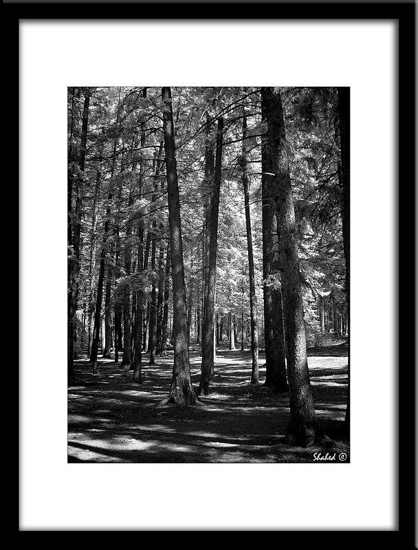 "Ref #6189-S <span id=""caption""><div class=""photocredit"">Photo © LenScape Photography</div></span>"