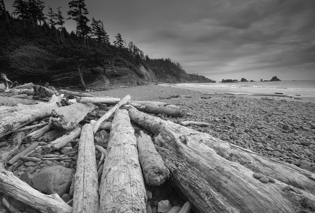 Fallen Timber, Ruby Beach Oregon