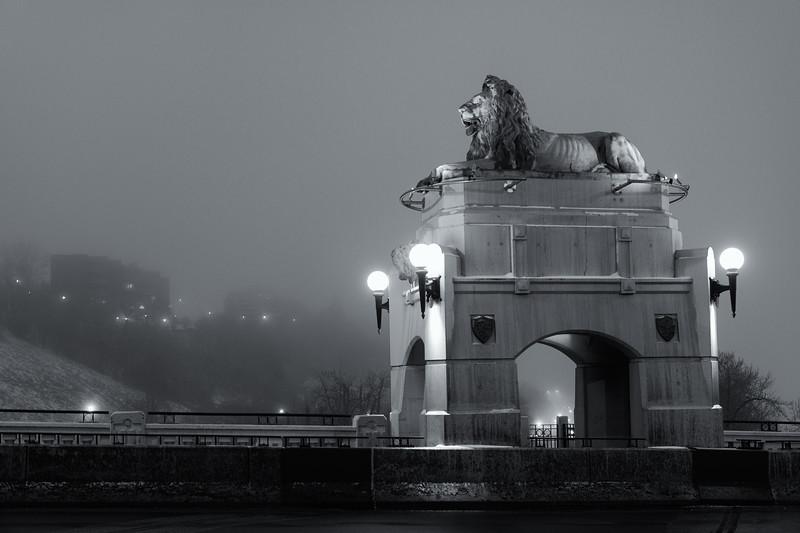 Lion in Fog