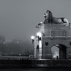 Lion in Fog