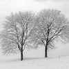"I like to call these trees ""The Trees on the Hill"" Photographed after a fresh snowfall in Montour County, Pennsylvania."