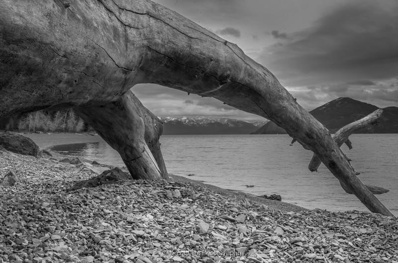 DF.3890 - driftwood log on beach, Lake Pend Oreille, Kaniksu National Forest, ID.