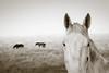 Equine stare