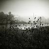 13   Misty Morning at the Nevele