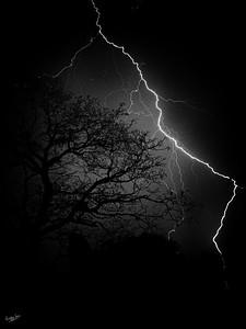 Tree Lightning