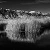 Wetlands of the Eastern Sierra Nevada