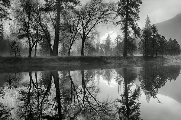 Mist in the Meadow