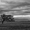 Storm Over Lone Oak