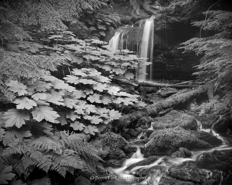 S.5204 - Fern Falls, Coeur d'Alene National Forest, ID.