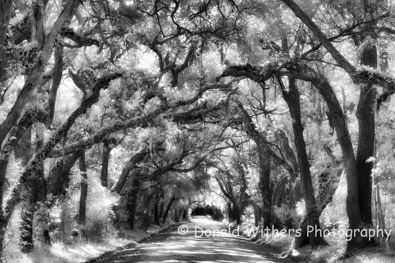 Veil of Oaks