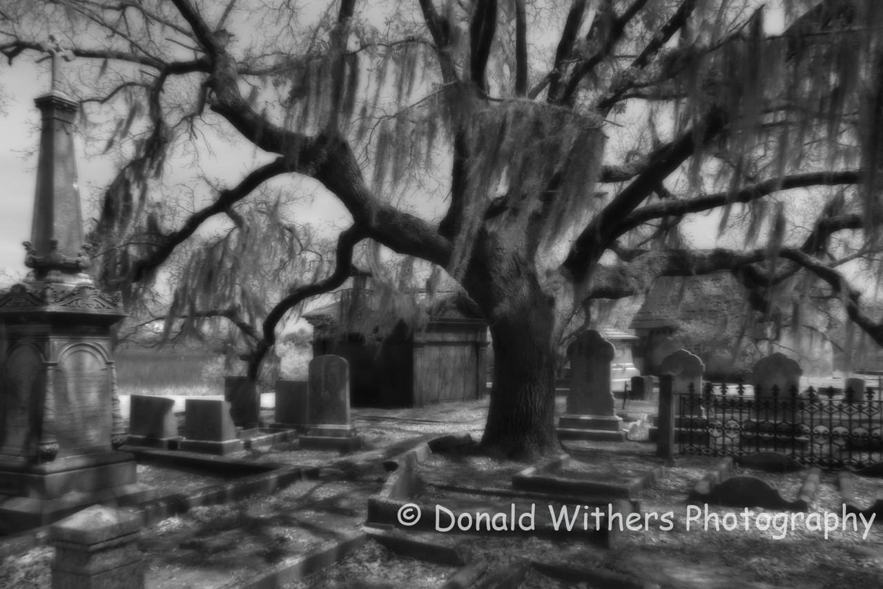 Magnolia Cemetery 2  -  Charleston