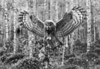 G.G.Owl. BW.