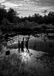 B&W NC Swamp