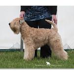 Post Graduate Dog - 1st