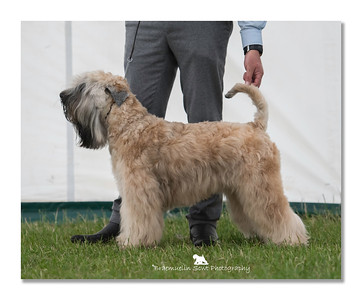 Junior Dog - 1st & Best Junior In Breed