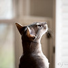 Blue squirrel~watching