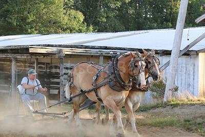 WP-BHF-pulling-harness-horses-090816-AB