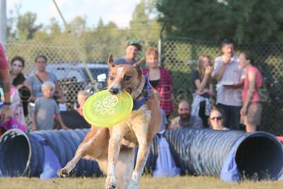 WP-BHF-stunt-dogs-frisbee-090816-AB