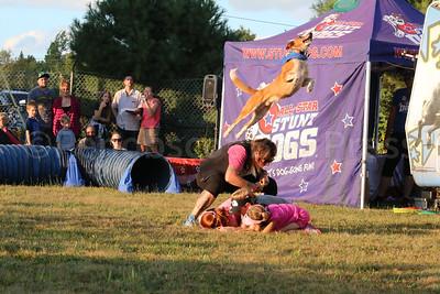 WP-BHF-stunt-dogs-leap-090816-AB