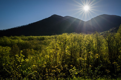 Treetop Sunrise