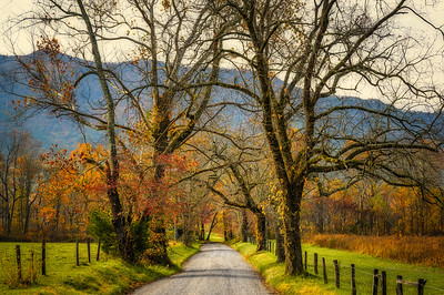 Cades Cove Gravel Road