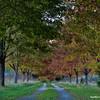 Foliage Canopy