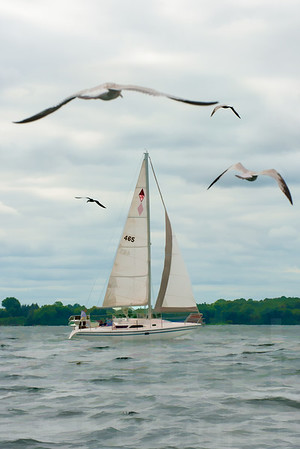 Minnesota Sailboats 103 | Wall Art Resource