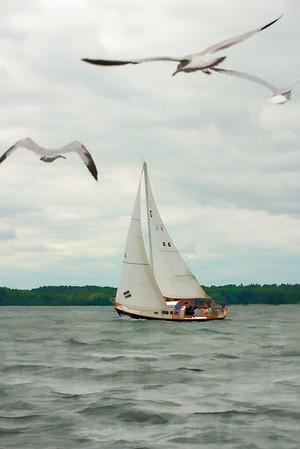 Minnesota Sailboats 101 | Wall Art Resource