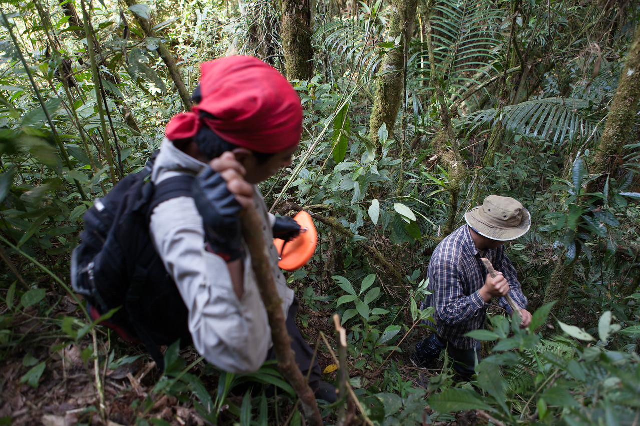 Tintaya Plot, Madidi, Bolivia. Left to right: Romeo Villanueva, Daniel Alanes