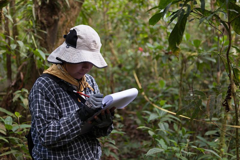Tintaya Plot Census, Madidi, Bolivia. Pictured: Esther Mosqueira
