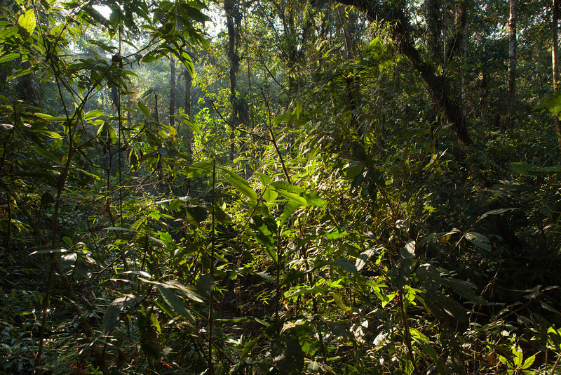 Forest Near Base Camp, Tintaya Plot Expedition, Madidi, Bolivia