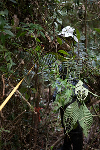 Re-establishing the Sampling Grid, Tintaya Plot, Madidi, Bolivia