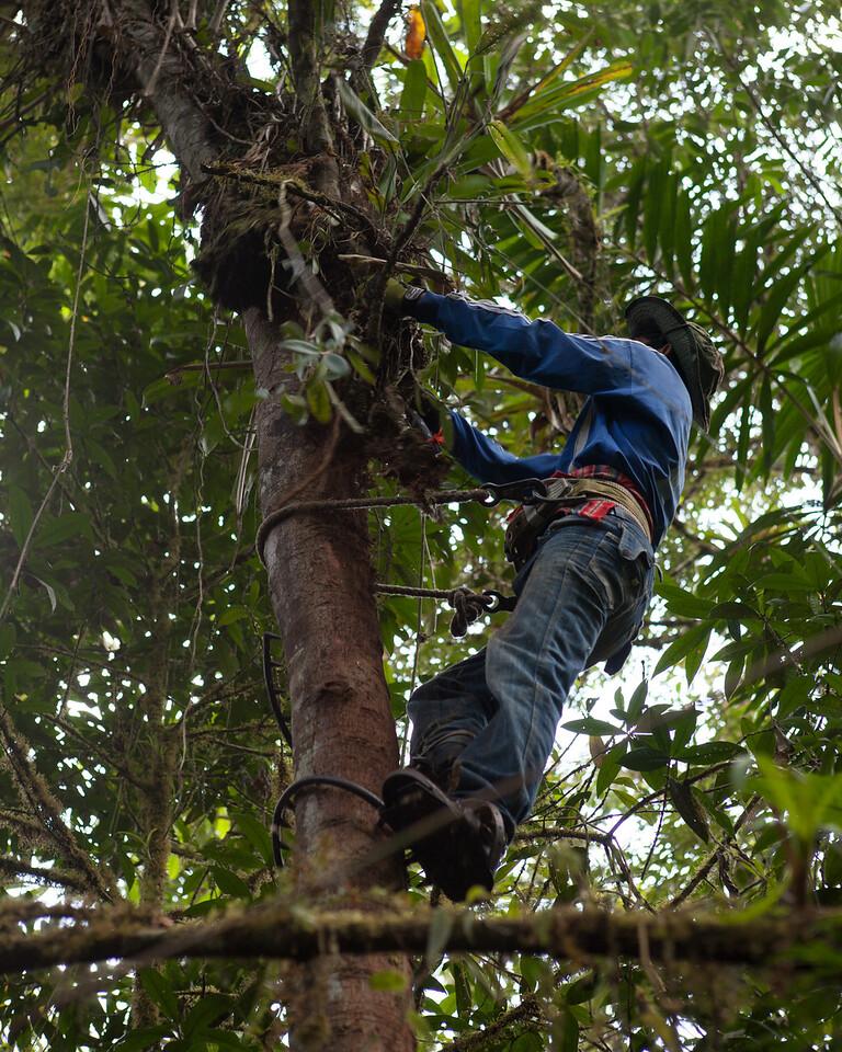Trait Sampling, Tintaya Plot, Madidi, Bolivia. Pictured: Don Augustin