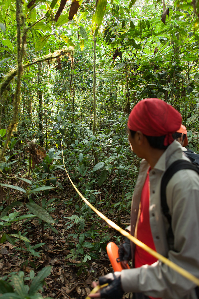 Re-establishing the Sampling Grid, Tintaya Plot, Madidi, Bolivia. Pictured: Romeo Villanueva