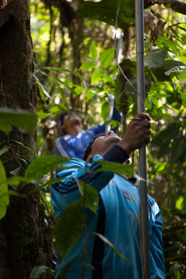 Trait Sampling, Tintaya Plot, Madidi, Bolivia. Front to back: Don Jaime, Don Augustin