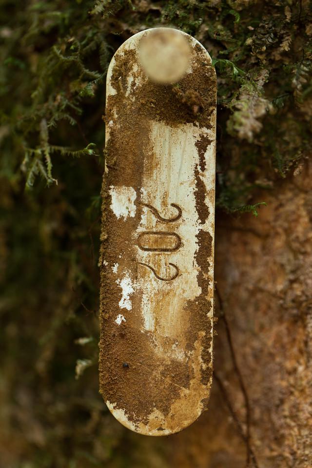 Tree Tag, Tintaya Plot, Madidi, Bolivia