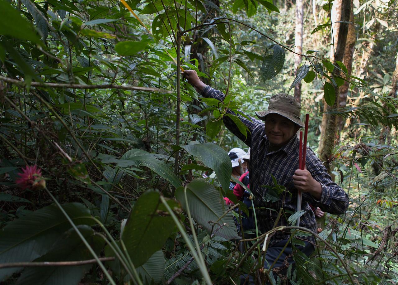 Re-establishing the Sampling Grid, Tintaya Plot, Madidi, Bolivia. Pictured: Daniel Alanes