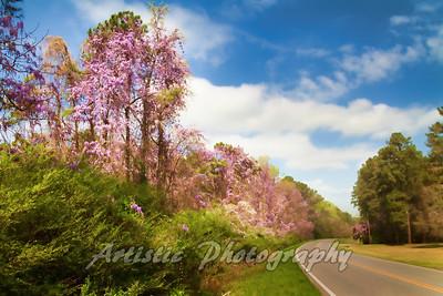 Roadside Splendor